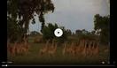 WAET Antelope