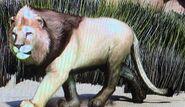 West African Lion ZTX