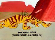 Burmese tiger 1954 character