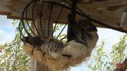 Columbus Zoo Sloth (V2)