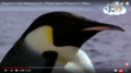 Did You Know That Penguins Are Birds