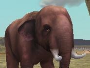 Indian-elephant-zootycoon2018