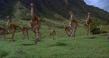 Jurassic Park Gallimumus Stampeede.jpg