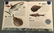 Ocean Life Dictionary (23)