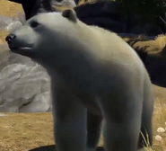 Polar-bear-zootycoon3