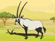 Rileys Adventures Arabian Oryx