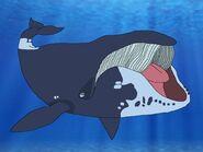 Rileys Adventures Bowhead Whale