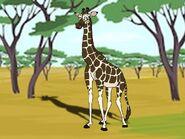 Rileys Adventures Nubian Giraffe
