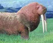 Walrus switch zoo