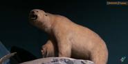 CMONH Polar Bear