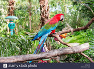 DAK Red and Green Macaw