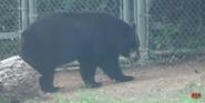 Forth Worth Zoo Bear