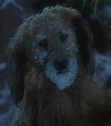 Max the Dog in How the Grinch Stole Christmas (2000)
