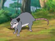 Rileys Adventures Virginia Opossum