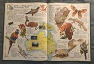 The Animal Atlas (24)