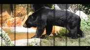 Virginia Zoo Black Bear