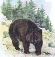 Atlas-Bear-Pictures