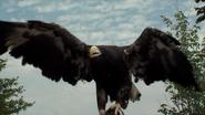 Cincinnati Zoo Sea Eagle
