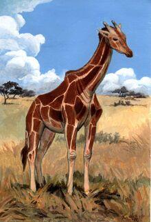 Giraffa jumae.jpg