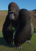 Gorilla, Western Lowland (Planet Zoo)