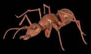 Honey I Shrunk the Kids Ant.jpg