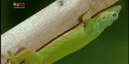 MMHM Gecko