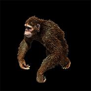 Monkey aoe2DE