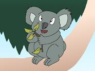 Rileys Adventures Queensland Koala
