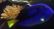 Shedd Aquarium Blue Regal Tang