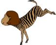 Zebra Francine Kicks