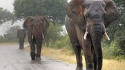 Default-1464357611-2422-elephants-could-hear-rain-over-hundreds-of-kilometers