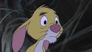 Depressed rabbit 3
