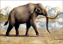 Inside steppe mammoth.jpg