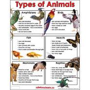 Mammals Birds Reptiles Amphibians Fish Insects