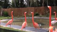 Oh Shitake Mushrooms Flamingos