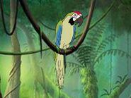 Rileys Adventures Military Macaw