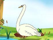 Rileys Adventures Mute Swan