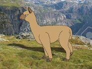 Rileys Adventures Suri Alpaca