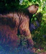 Toledo Zoo Megatherium