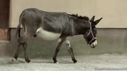 Utica Zoo Donkey