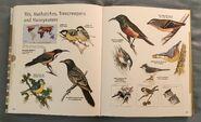 Visual Dictionary of Animals (98)
