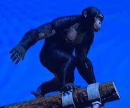 Western Chimpanzee ZTX