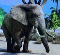 African Bush Elephant ZTX