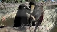 Baton Rouge Zoo Diana Monkey