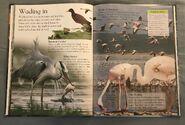 Birds (Eye Wonder) (11)