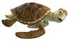 Crush the Green Sea Turtle