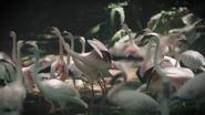 FWZ Lesser Flamingos
