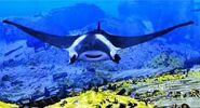 Giant manta ray dolphin story of the dreamer