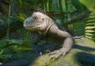 Lesser-antillean-iguana-planet-zoo