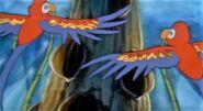 Macaw cndrr